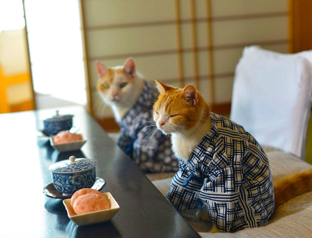 Доброе утро на японском фото